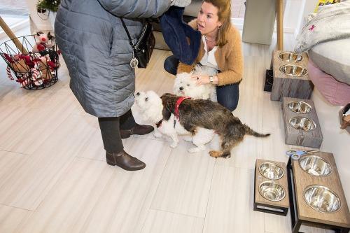 2015/12/16 knokke belgium: hond en mens vriendschap relatie hondentrimsalon  foto ivan put