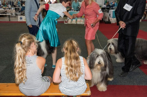 2016/08/26 brussel belgium : european dog show foto ivan put